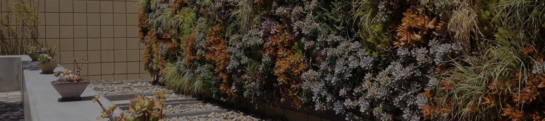 succulent-wall-main.jpg